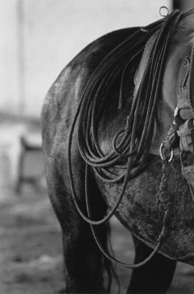 Valdir Cruz, 'Cavalo Encilhado com Laço nos Tentos', 1989