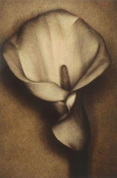 Sheila Metzner, 'Calla', 2000