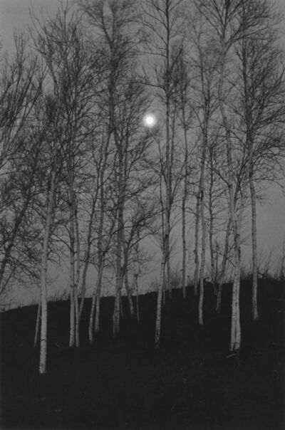 George Tice, 'Birch Trees by Moonlight, The Adirondacks, NY', 1972