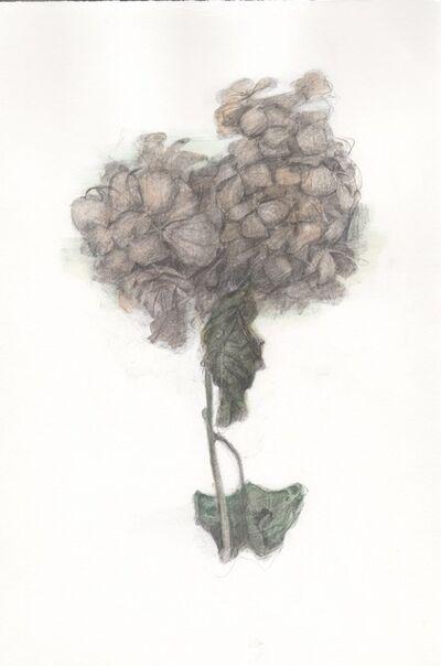 Maria DiMauro, 'Pink Hydrangea', 2016
