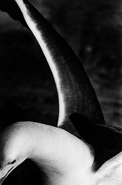 Renato D'Agostin, 'Venice (Bird)', 2011