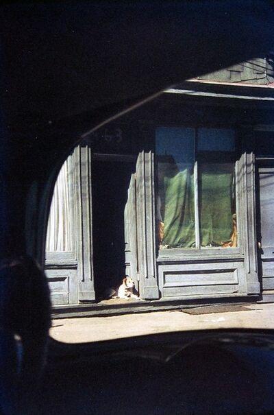Saul Leiter, 'Dog in Doorway, Paterson', 1952