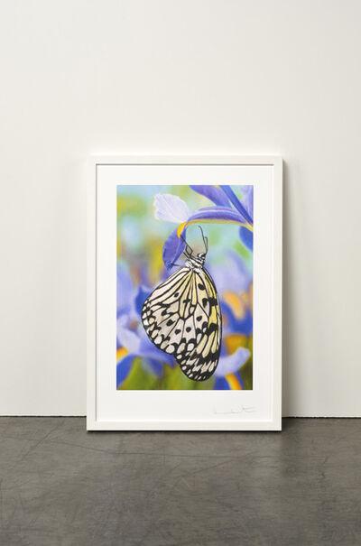 Damien Hirst, 'Paper Kite Butterfly on Spanish Iris', 2011