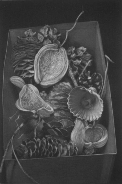 Judith Rothchild, 'Histories Naturelles', 2012