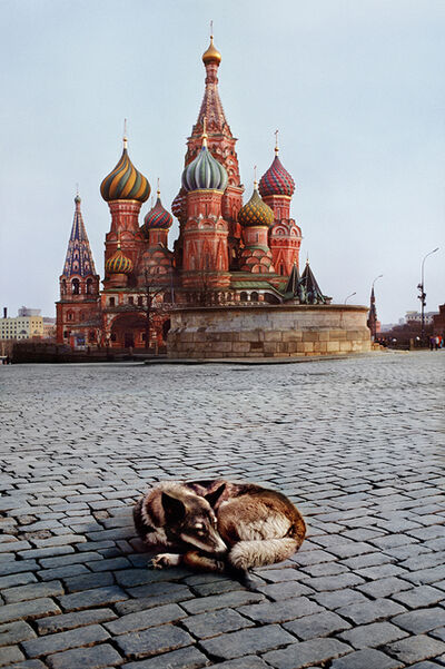 Steve McCurry, 'Dogs sleeps near St. Basil's Cathedral, Moscow, Russia', 1993