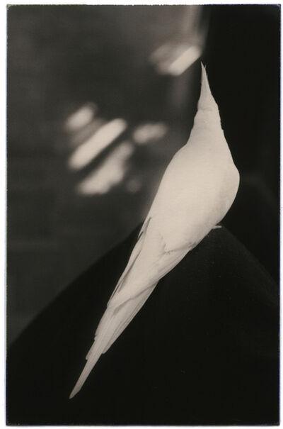 Yamamoto Masao, 'Untitled #1027', 2003