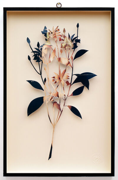 Paolo Giardi, 'You Can Learn a Lot of Things From the Flowers - Plant CXXXVII - Enkianthus quinqueflorus - Playmen - La Playgirl di Dicembre - Mia', 2014
