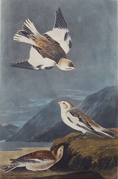 John James Audubon, 'Snow Bunting', 1834