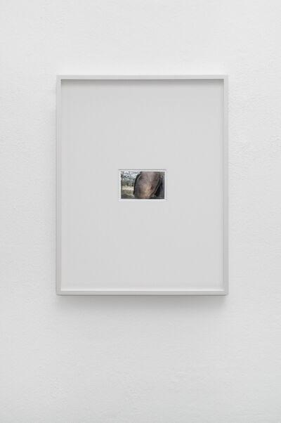 Luca Trevisani, 'La natura, una faccenda ottusa (Nature is a dull affair)', 2016