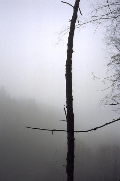 Jitka Hanzlová, 'Forest #43, Untitled (Black Cross)', 2004