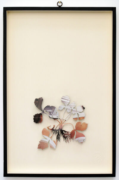 Paolo Giardi, 'You Can Learn a Lot of Things From the Flowers - Plant XXXVI', 2011