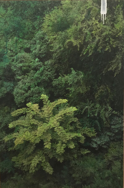 Honggoo Kang, 'Study of Green-grove 2', 2015