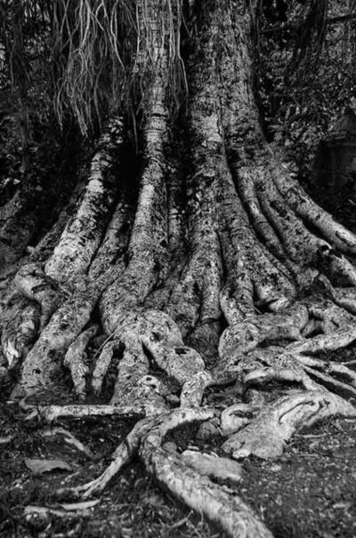 "Mohan Lal Majumder, 'Blessing for the Trees, Black and White Photography by Indian Artist ""In Stock""', 2010"