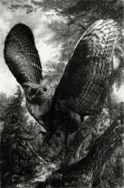 Tyler Vouros, 'Great Grey Owl', 2019