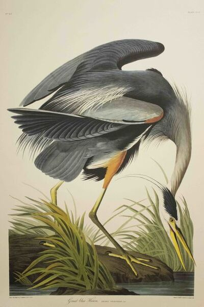 John James Audubon, 'Great Blue Heron, Edition Pl. 211', ca. 1999