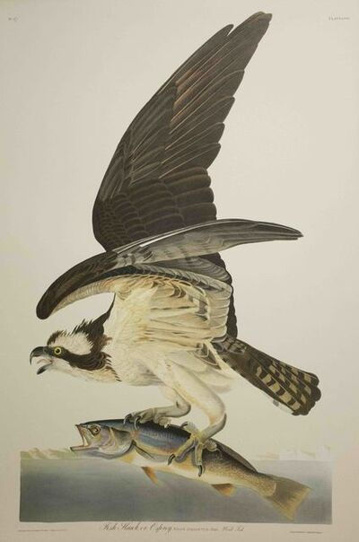 John James Audubon, 'Fish Hawk, or Osprey, Edition Pl. 81', ca. 1999