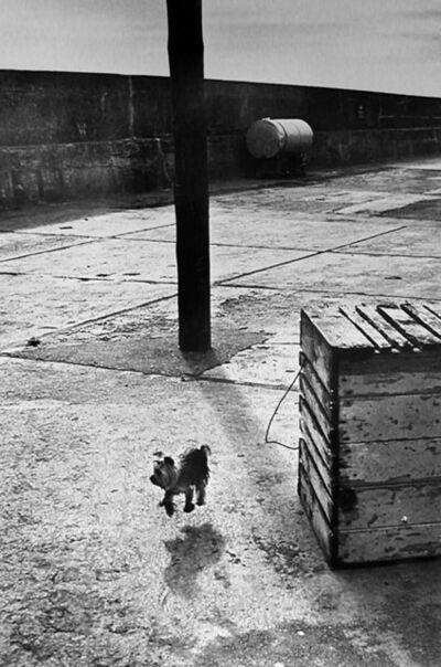 Elliott Erwitt, 'Ballycotton, Ireland', 1968