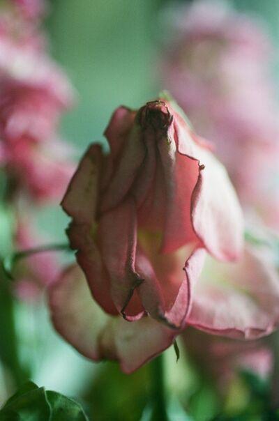 Lina Scheynius, 'untitled from flower 2018', 2018