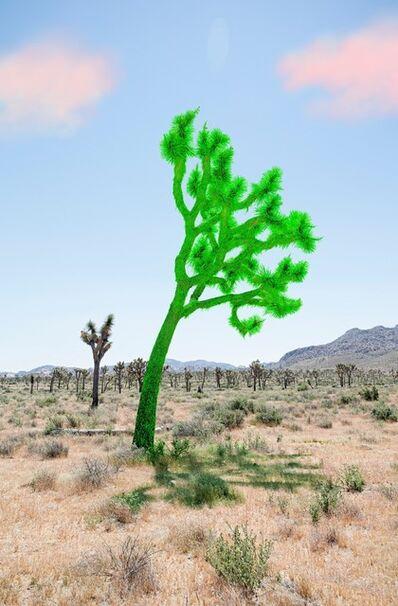 Sarah Anne Johnson, 'Joshua Tree (Green)', 2018