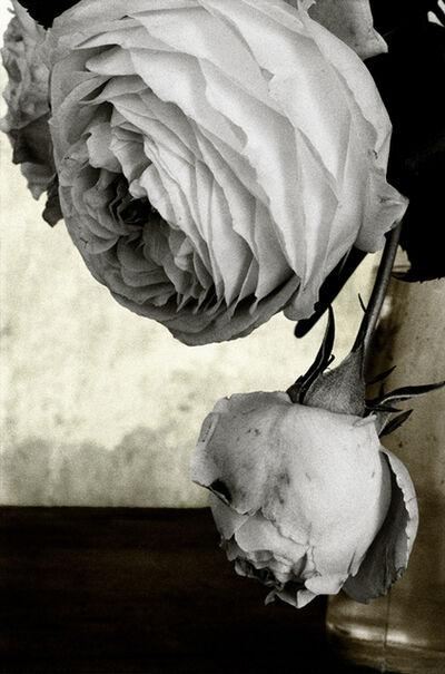 Vera Mercer, 'White Rose', 1998