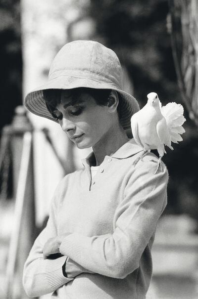 Terry O'Neill, 'Hepburn with Dove', 1967