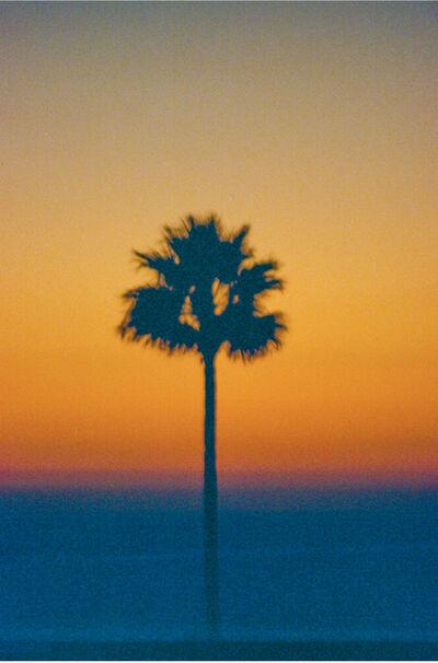 Marco Walker, 'Lone Palm', 2020