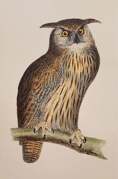 Francis Morris, 'Eagle Owl', 1856
