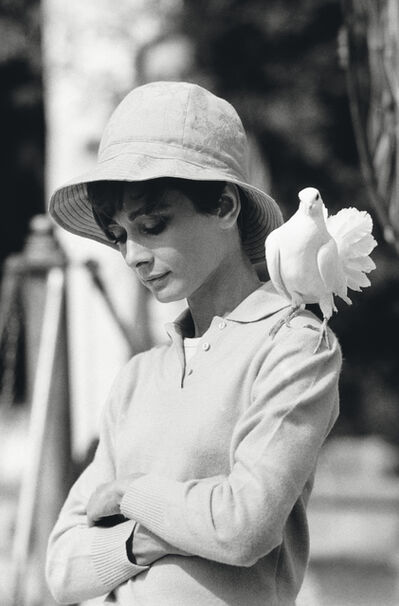 Terry O'Neill, 'Hepburn With Dove', 1966