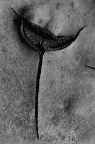 """Lucien Clergue, 'Craquelure """"l'épée"""" Camargue', 1985"""