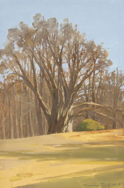 Marilyn Turtz, 'Old Tree', 2019