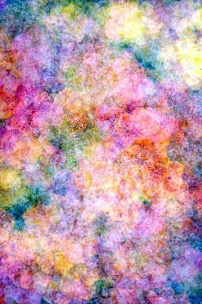 Darryll Schiff, 'Primavera 1', 2014