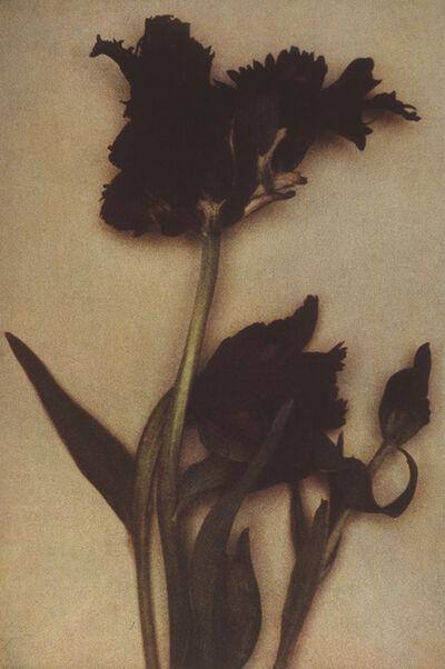 Sheila Metzner, 'Black Parrots', 2000