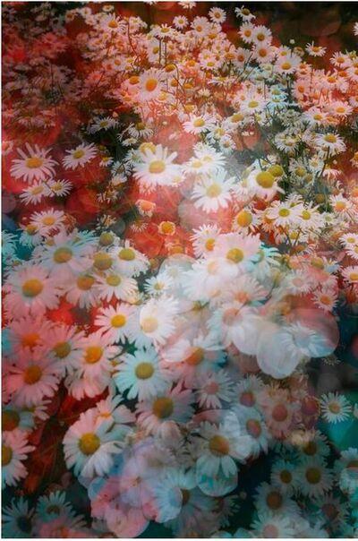 David Burdeny, 'In Bloom 02, Shanghai, China', 2019