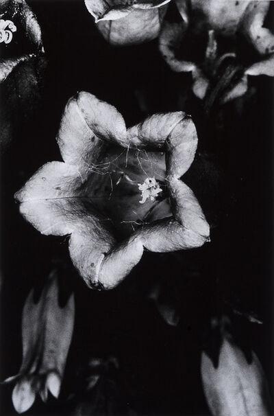 Nobuyoshi Araki, 'From the series 'Erotos'', 1993