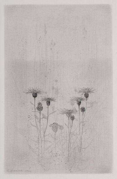 Gunnar Norrman, 'Blaklint (Cornflower)'