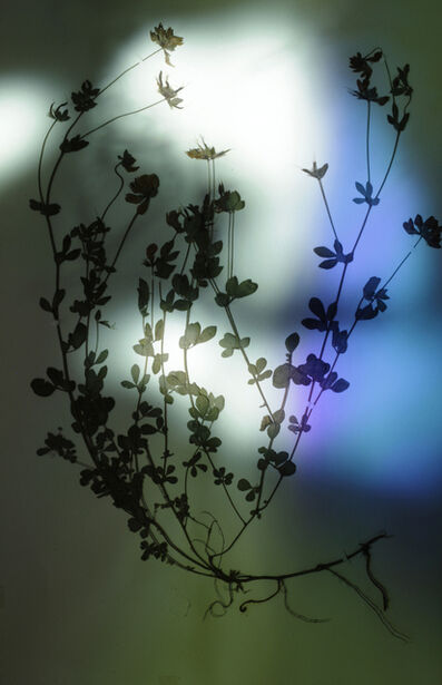 Bernard Voïta, 'Herbier populaire II', 2017