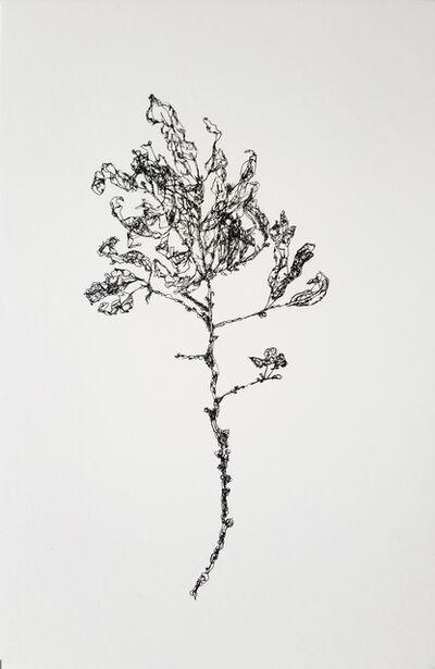 John Adelman, '3503 Parts of a Branch', 2019