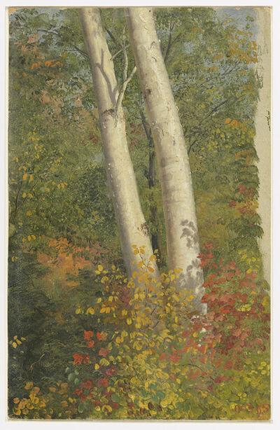 Frederic Edwin Church, 'Birch Trees in Autumn', 1865