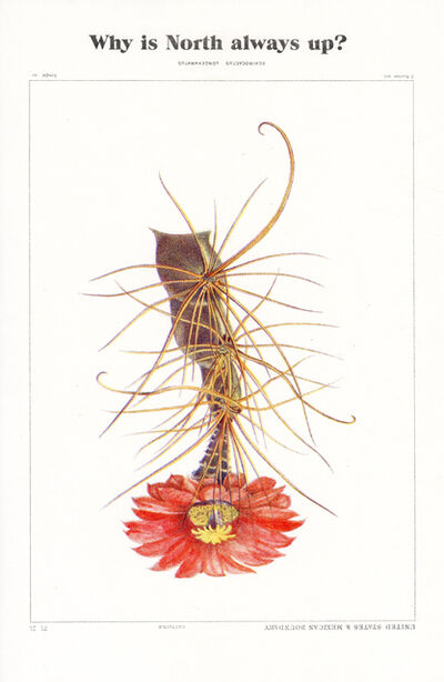 Anri Sala, 'Why is North always up, Echinocactus?', 2020
