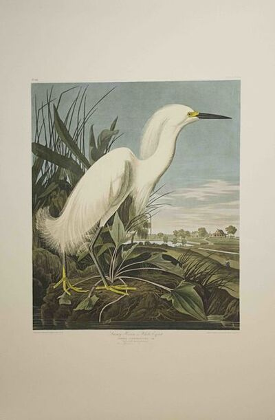 John James Audubon, 'Snowy heron, or White Egret, Edition pl. 242', ca. 1999