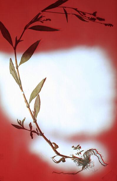 Bernard Voïta, 'Herbier populaire VI', 2017