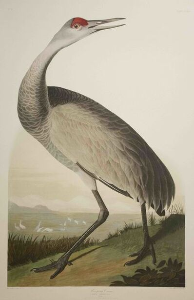 John James Audubon, 'Hooping Crane, Edition Pl. 261', ca. 1999