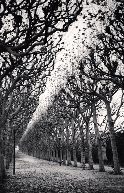 Michael Kenna, 'JARDIN DES PLANTES, STUDY 1, PARIS, FRANCE, 1988', 1988