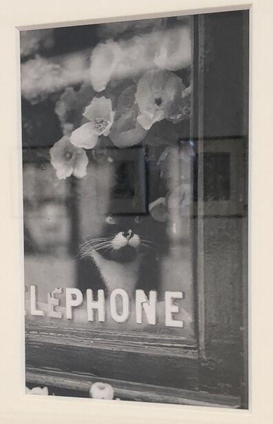 Brassaï, 'Le Chat du Fleuriste', ca. 1938