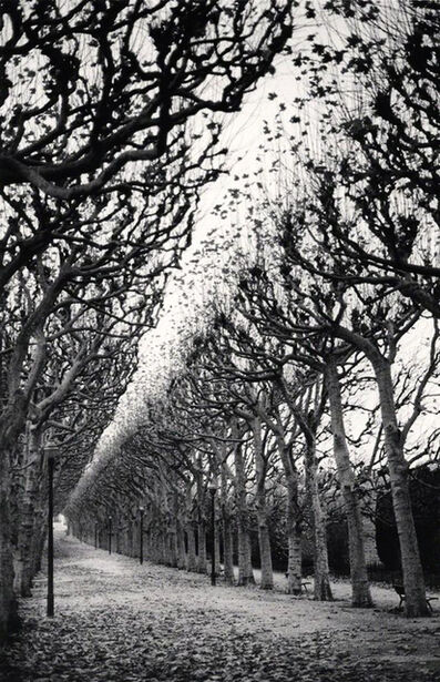 Michael Kenna, 'Jardin des Plantes, Study 1, Paris, France', 1988