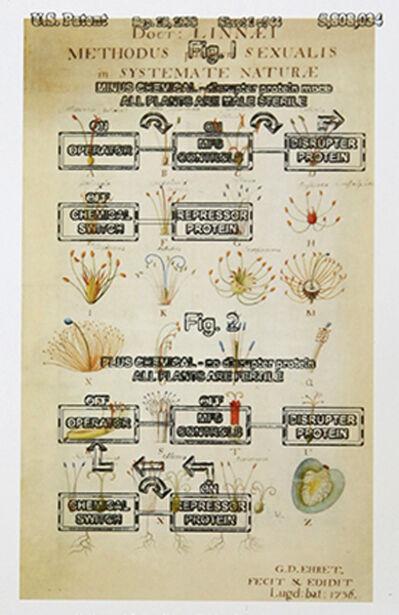 Pedro Neves Marques, 'Systema Naturae (Linnaeus: 1736).......', 2017