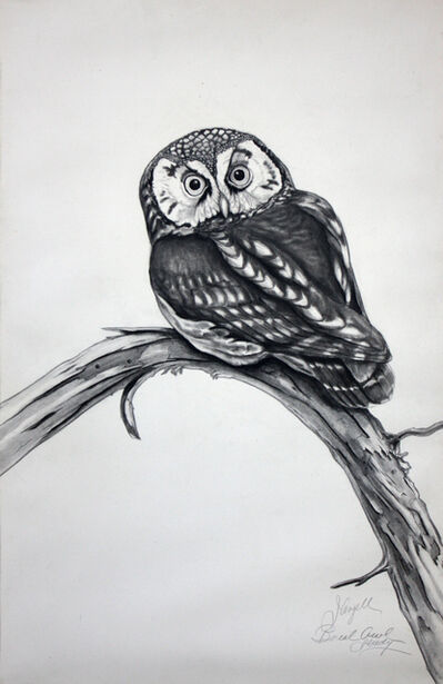 Tony Angell, 'Boreal Owl Study', 1972