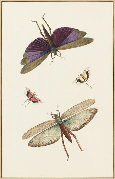 Nicolaas Struyk, 'Dragonflies', ca. 1719