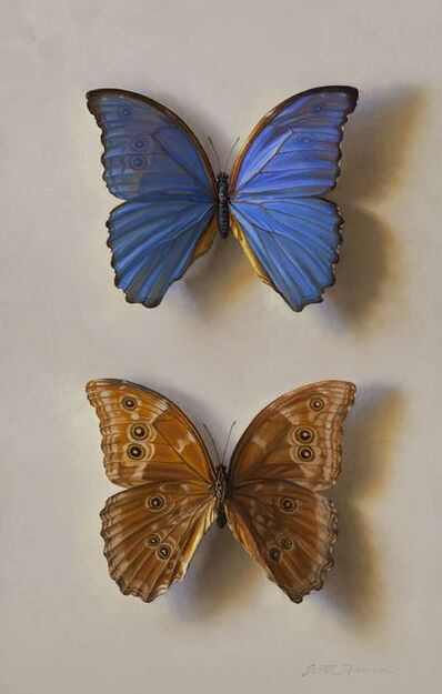 Scott Fraser, 'Blue Morpho - Front and Back', 2018