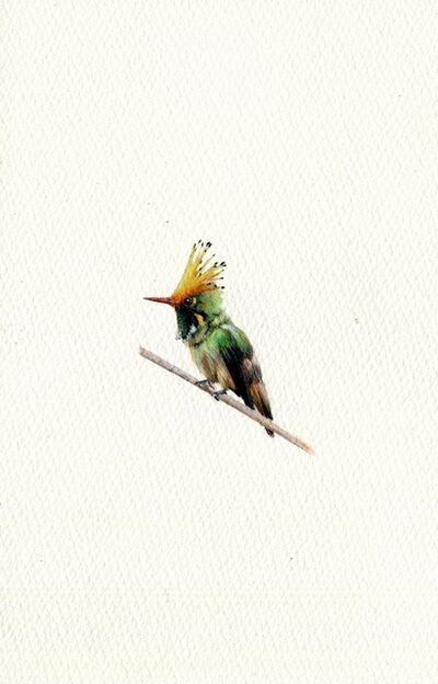 Dina Brodsky, 'Rufus Crested Coquette', 2020